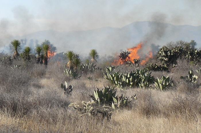 Arrasaron incendios con más de ocho mil hectáreas de bosque